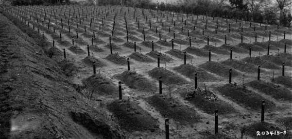 Από το νεκροταφείο του Ινστιτούτουτου του Χάνταμαρ στην Έσση, ενός από τα 6  όπου οι Ναζίδες δολοφονούσαν μεταξύ 1941 και 1945 ΑΜΕΑ, ακόμη και παιδιά και τα έθαβαν σε μαζικούς τάφους.